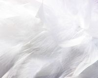 Fluffy feathers stock photos