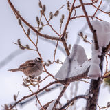 Fluffy feathers on a cold morning, Alaska. Royalty Free Stock Photos