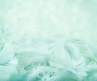 Fluffy feathers on turquoise blurry background Stock Photos