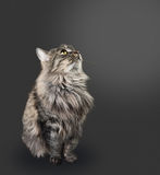 Fluffy feline Stock Photography
