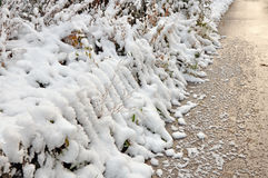 Fluffy first snow. Stock Image
