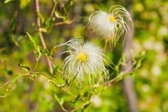 Fluffy flower Stock Photos