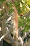 Fluffy flower. Fluffy dried leaf stock images