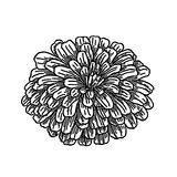 Fluffy flower - vector clip art Stock Photo