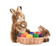 Fluffy foxy rabbit in basket with Easter eggs. Royalty Free Stock Photos