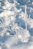 Fluffy frost Royalty Free Stock Photo