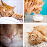 Fluffy funny cat Royalty Free Stock Images