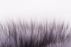 Fluffy fur Royalty Free Stock Photo