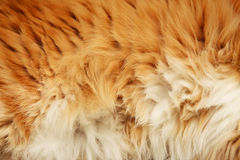 Fluffy fur Stock Photography
