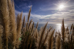 Fluffy grass in the sun royalty free stock image