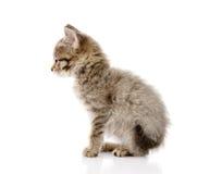 Fluffy gray beautiful kitten.  on white background Stock Photography