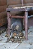 Fluffy gray cat Stock Photos