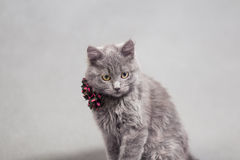 Fluffy gray kitten with decoration Stock Images