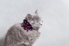 Fluffy gray kitten with decoration Royalty Free Stock Photo