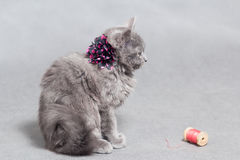 Fluffy gray kitten with decoration Stock Photography