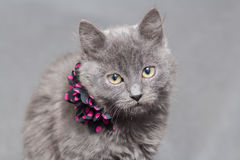 Fluffy gray kitten with decoration Stock Photo