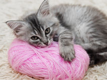 Fluffy gray kitten with a pink ball of yarn Stock Photography