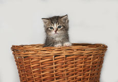Fluffy gray and white kitten sitting in basket Royalty Free Stock Photography