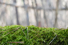 Fluffy green moss on blurred background. Fluffy green moss horizontal on blurred background stock photos