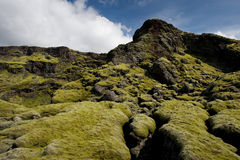 Fluffy green moss on rocks, Iceland Royalty Free Stock Photo