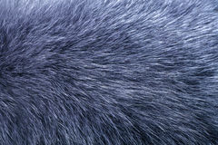 Fluffy grey fur texture or background Stock Photo