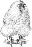 Fluffy hen vector illustration