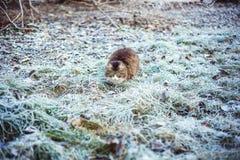 Cat on frosty grass Stock Photos