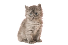 Fluffy kitten. The gray fluffy kitten sits on a camera on white backgroud isolated Stock Photo