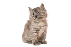 Fluffy kitten. The gray fluffy kitten sits on a camera on white backgroud isolated Royalty Free Stock Photo
