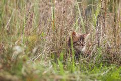Fluffy kitten alone in the grass in summer stock photography