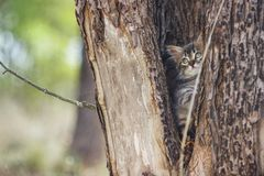 Fluffy kitten alone in the hollow of a tree in summer royalty free stock image