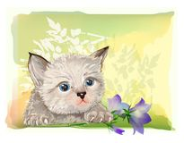 Fluffy kitten  with bluebell Stock Photo