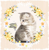 Fluffy kitten, butterfly and roses. Stock Image