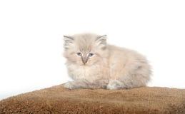 Fluffy kitten on cat furniture Stock Photo