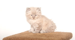 Fluffy kitten on cat furniture Stock Photo