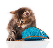 Fluffy kitten Stock Images