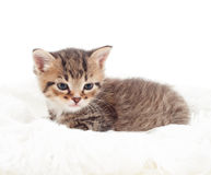Fluffy kitten Stock Photo