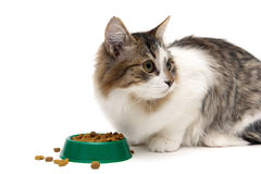 Fluffy kitten eats food from the green bowl on a white backgroun Stock Photography