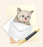 Fluffy kitten with envelope. Royalty Free Stock Photography