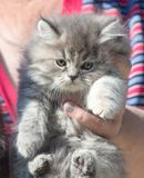Fluffy kitten in the hand Stock Photo