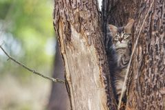 Fluffy kitten alone in the hollow of a tree in summer royalty free stock images
