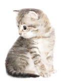 Fluffy kitten. Imitation of watercolor painting stock illustration