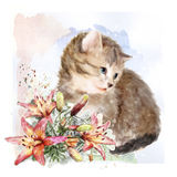 Fluffy kitten with lilies. Royalty Free Stock Photography