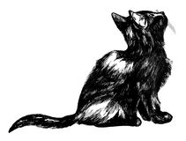 Fluffy kitten looking up. Detailed ink drawing of a cute black cat looking up at the sky - isolated on white Royalty Free Stock Image