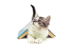 Fluffy kitten lying under an open book isolated on white backgro Stock Images