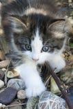 Fluffy Kitten Royalty Free Stock Images