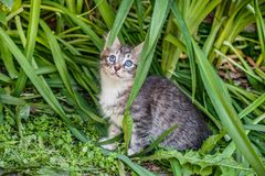 Fluffy kitten playing on the grass. Little kitten is a very active, funny animal. The concept of caring for Pets stock photos