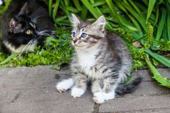 Fluffy kitten playing on the grass. Little kitten is a very active, funny animal. The concept of caring for Pets stock photography