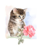 Fluffy kitten with rose. Royalty Free Stock Photography
