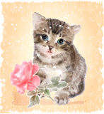 Fluffy kitten with rose. Royalty Free Stock Photo